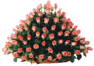 Round arrangement of 150 Roses