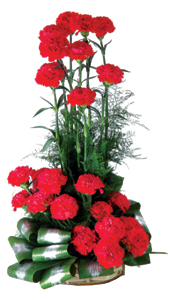 An arrangement 25 Carnations