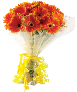 Bunch of 20 Gerberas flowers delivery in Bunch of 20 Gerberas