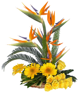 Arrangement of Mix exotic Flowers