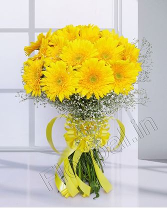 Gerbera bunch