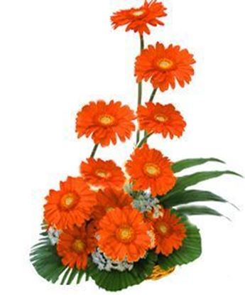 Basket arangement of 12 Orange Gerberas